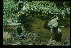 Onchocerca volvulus. Women washing clothes, in stream which produces biting flies, in endemic region.