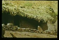 Trypanosoma cruzi. Epidemiology. Typical adobe house with thatched roof within which are found people, chickens, guinea pigs, and infected triatomines. The most important vector here was Rhodnius ecuadoriesis.