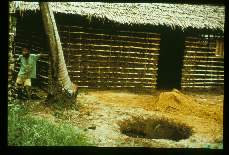 Culex fatigans. Tanzania. Mosquitoes breed in pit latrines like the one being dug here. Transmission occurs at night when mosquitoes invade houses via the eaves. Prevention might be achieved by screening and/or residual insecticides sprayed on walls where heavy mosquitoes rest after biting.